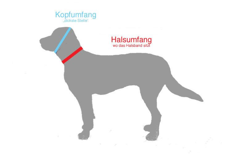 Mass_nehmen_Zeichnung_Hund